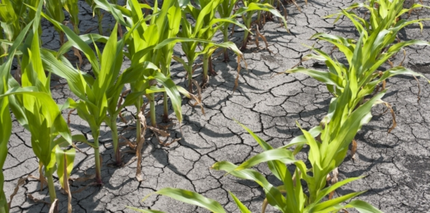 "A ""summer drought of policy leadership"" could have dire consequences for the global economy (Shutterstock photo)."