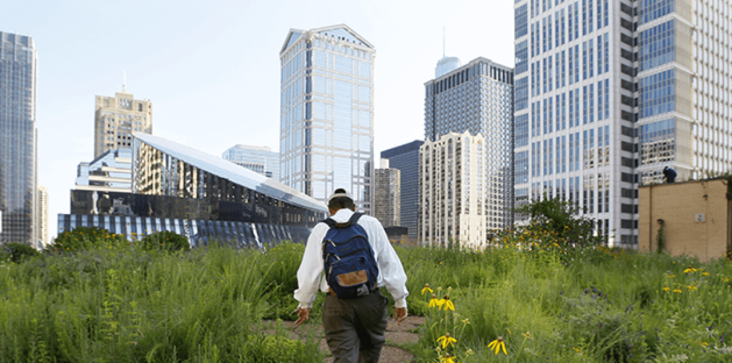 Beekeeper Michael Thompson, makes his way through the secret garden of wildflowers and native grasses on top of City Hall in Chicago to check on over 100,000 bees (AP Photo/Charles Rex Arbogast).