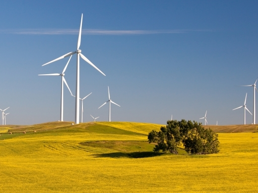 Wind turbines in a field