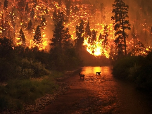Record-shattering heatwaves and exceptional wildfires have occurred throughout the northern hemisphere this summer. (John McColgan, Alaska Forest Service)