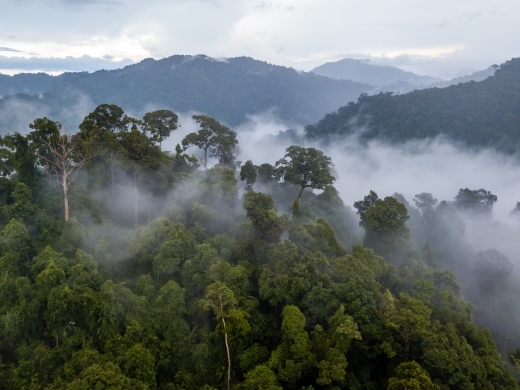The Amazon rainforest is the world's largest forest reserve, covering more than seven million square kilometres and accounting for more than 40 percent of forests globally. (Shutterstock)