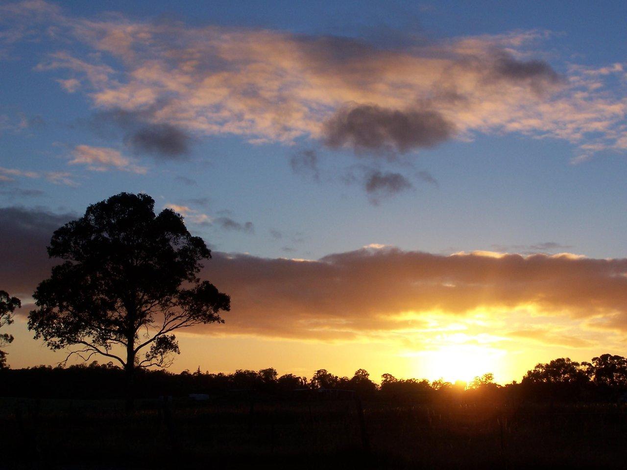 Tree_at_sunrise.jpg